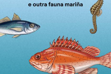 Os peixes e outra fauna mariña